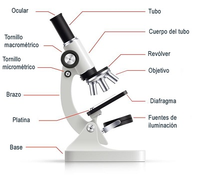 Microscopio 3