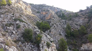 Barranco pinar de les Calces