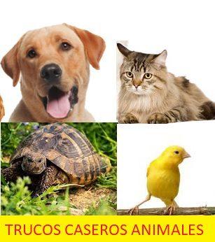 Trucos caseros animales