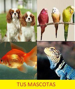 Trucos caseros mascotas
